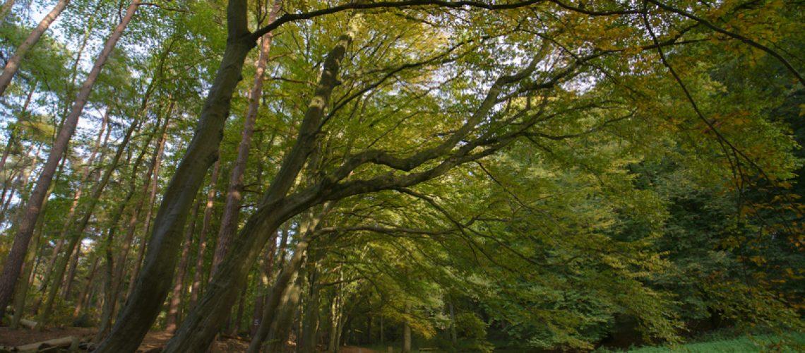 forest - שמיכה ירוקה